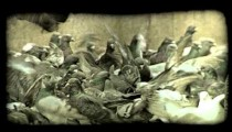 Feeding Pidgeons. Vintage stylized video clip.