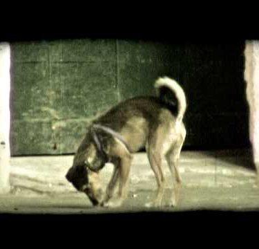 Street Dog 1. Vintage stylized video clip.