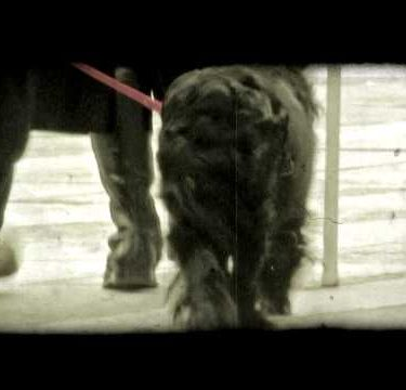 Walk the Dog 1. Vintage stylized video clip.