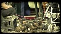 Park Puppies 3. Vintage stylized video clip.