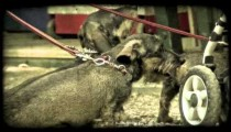 Park Puppies 2. Vintage stylized video clip.