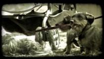 Park Puppies 1. Vintage stylized video clip.