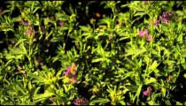 Close-up shot of purple flower bushes