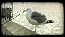 California pier. Vintage stylized video clip.