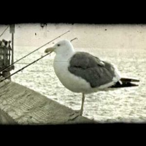 California pier. Vintage stylized video clip.