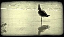 Seagull stands on beach. Vintage stylized video clip.