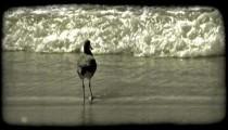 Bird preens on shore. Vintage stylized video clip.