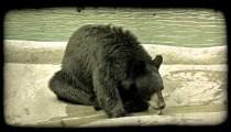 Bear drinks stream 2. Vintage stylized video clip.