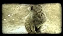 Lemur on a log. Vintage stylized video clip.