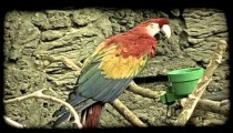 Colorful toucan. Vintage stylized video clip.