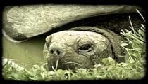 Turtle head. Vintage stylized video clip.