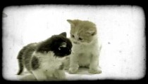 Two kittens play. Vintage stylized video clip.