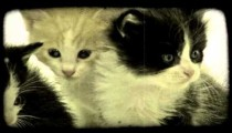 Three kittens together. Vintage stylized video clip.