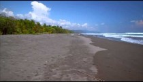 Footage of waves, sand, and tropical forest of beach
