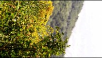 Sideways shot of yellow flowering plant at Zion National Park