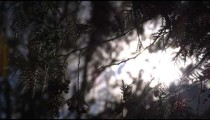 Low-angle footage of sunlight barely peeking through tree canopy