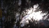Low-angle footage of sunlight barely peeking through tree canopy