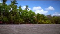 Footage of tropical beach, pans to record building behind trees