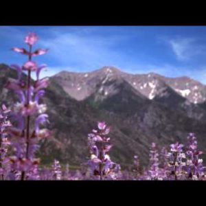 Racking focus of lavender and mountains