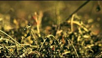 Handheld close-up shot of hay