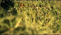Racking focus of hay