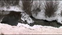 Snowy Creek cu