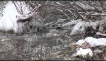 Snowy Creek Divide cu zoom