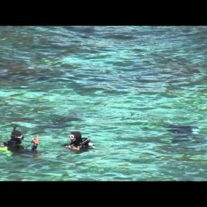 Scuba Divers in Lake