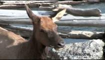Elk cu