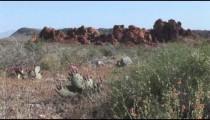VOF Desert Plants