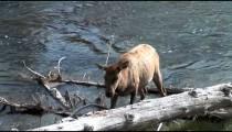 Elk Walks Stream pan