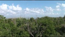 Cancun Beach Forest