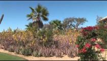Cabo Golf Planting pan