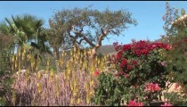 Cabo Golf Planting