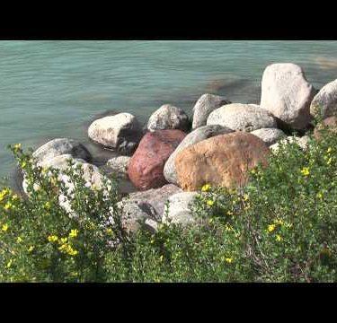 Lake Louise Shore Flowers cu