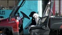 Dogs Wait in ATV