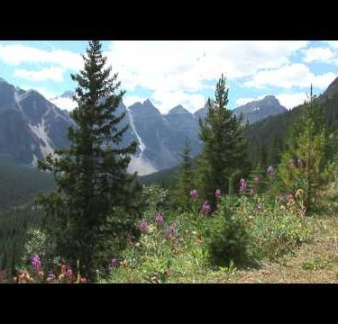 Canadian Rockies Flowers 2