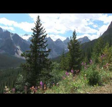 Canadian Rockies Flowers