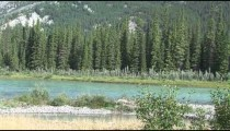 Bow River Pines zoom