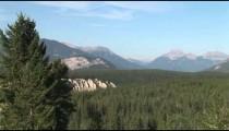 Banff Pine Forest