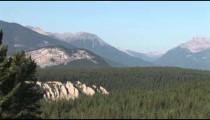 Banff Pine Forest zoom