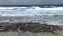 North Shore Waves zoom