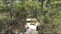 Ayo Rock Path Trees zoom