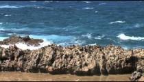 Aruba Ironshore Waves cu zoom