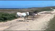 Aruba Burros zoom