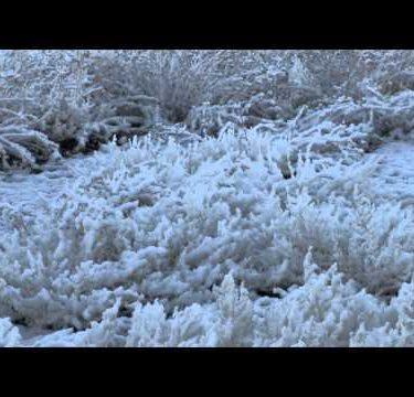 Snow on Desert Grass cu pan