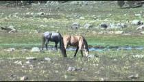 Horses by Stream
