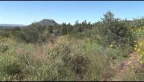 Apache Landscape