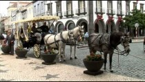 Porta Delgada Horse Carriage zoom