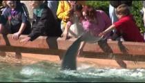 SeaWorld Dolphin Splash